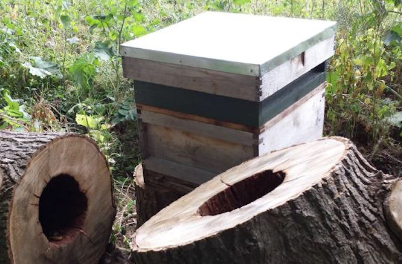 Man made hive vs tree hollow nest