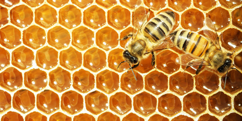 Designing new hives could save honey bees