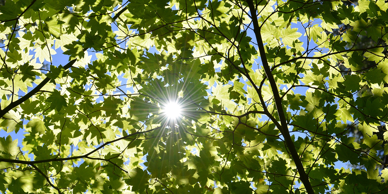 Revealing the secrets of photosynthesis