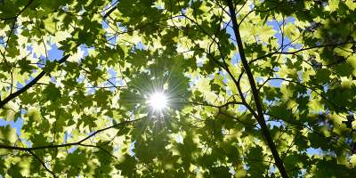 Rays of sunlight through the green leaves of a tree canopy
